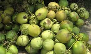 Tam's coconut trading